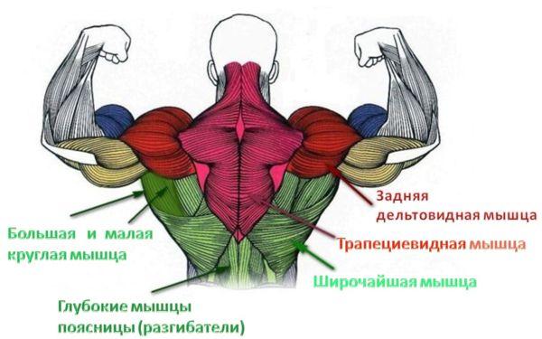 uprazhneniya-dlya-myishts-spinyi