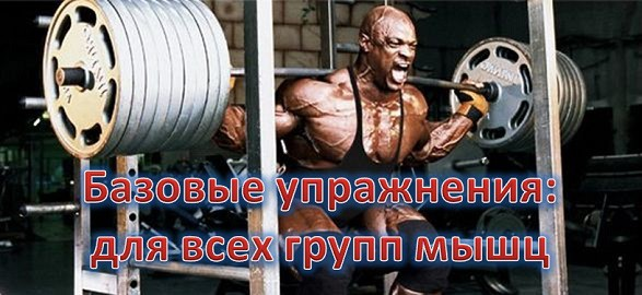 Базовые упражнения: для всех групп мышц